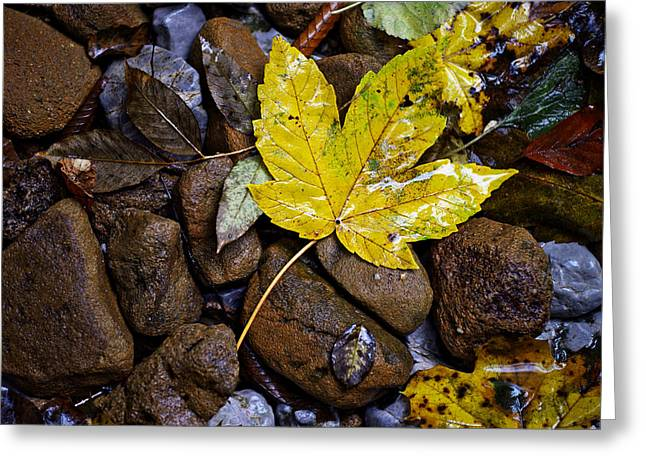 Wet Autumn Leaf On Stones Greeting Card