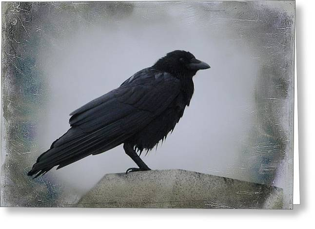 Lone Wet Blackbird Greeting Card by Gothicrow Images