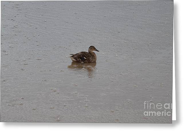 Wet Duck Greeting Card by Scott Lyons