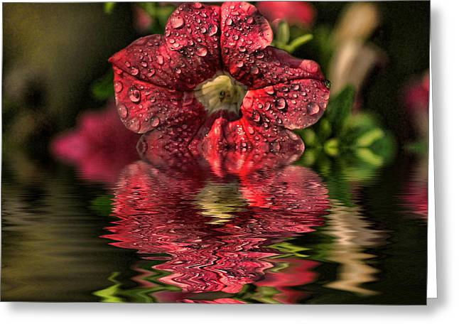 Wet Petunia Greeting Card