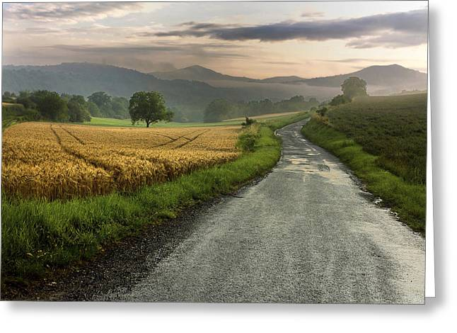 Wet Road Through Fields Of Wheat. Auvergne. France. Greeting Card