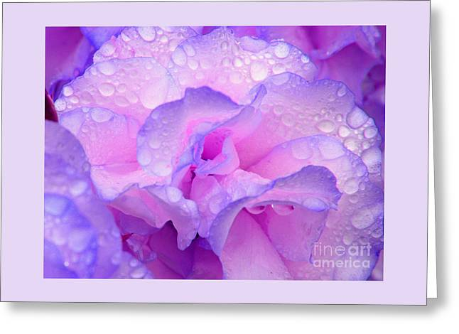 Wet Rose In Pink And Violet Greeting Card
