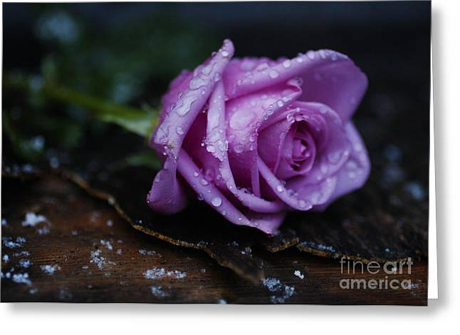 Wet Rose Greeting Card by Jonathan Welch