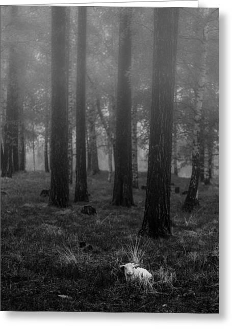 Wet Sheep Greeting Card by Thomas Berger