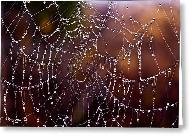 Wet Web Greeting Card by Mark Alder