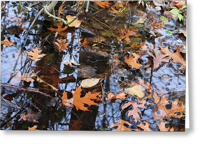 Wetland Reflections 12 Greeting Card by Mary Bedy