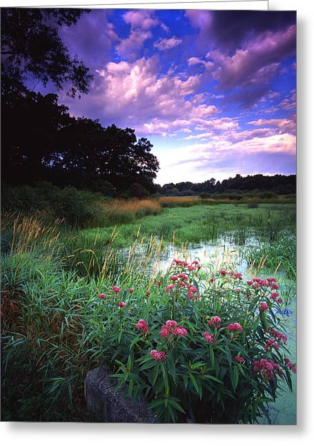 Wetland Wonder Greeting Card