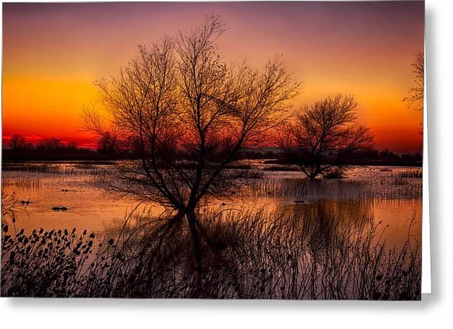 Wetlands Dawn Greeting Card