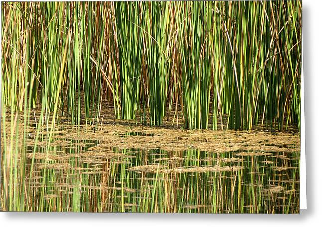 Greeting Card featuring the photograph Wetlands by Laurel Powell