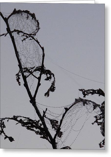 Wetting The Spiderweb. Greeting Card