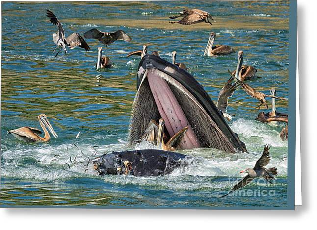 Whale Almost Eating A Pelican Greeting Card by Alice Cahill