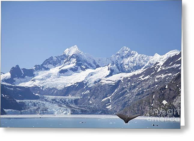 whale in Glacier Bay Park Alaska Greeting Card by Nick Jene