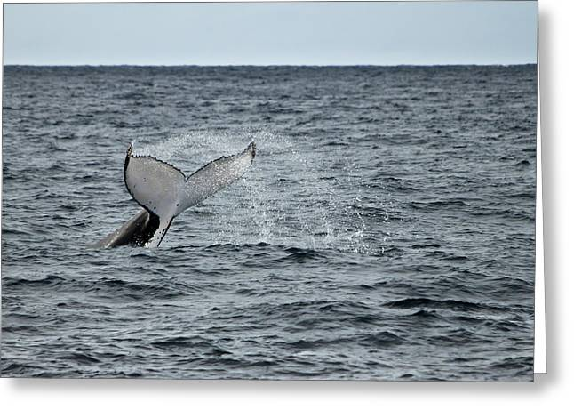Greeting Card featuring the photograph Whale Of A Time by Miroslava Jurcik