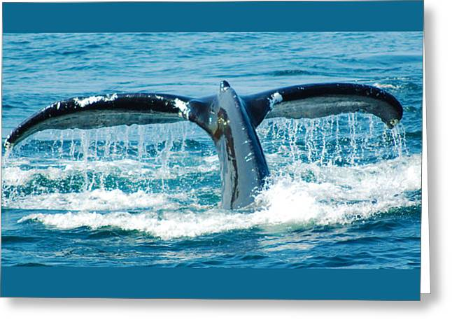 Whale Tail 3 Greeting Card
