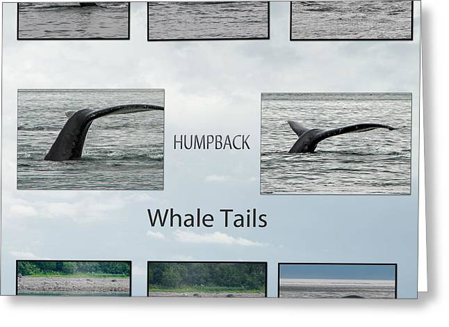 Whale Tails Greeting Card by Robert Bales