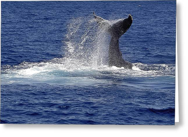 Greeting Card featuring the photograph Whale Tale Splash by Penny Lisowski