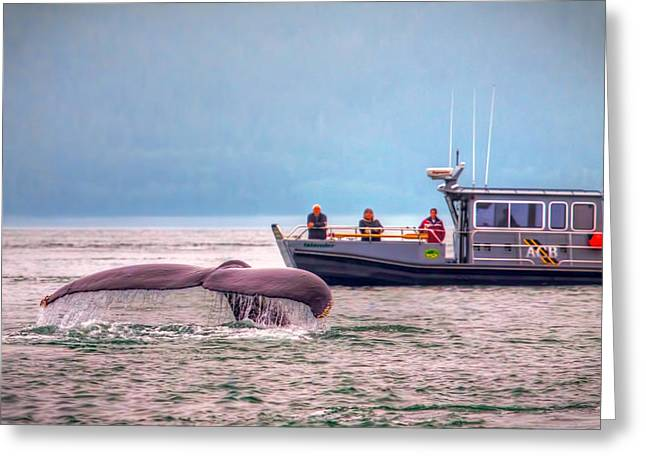 Whale Watching Greeting Card by Tom Weisbrook