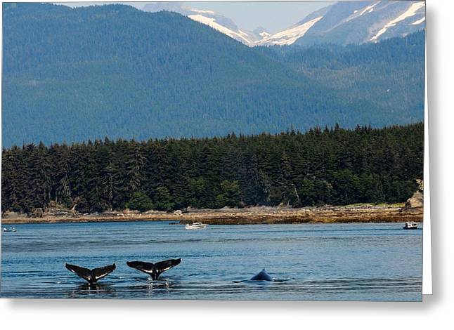 Whales In Alaska Greeting Card