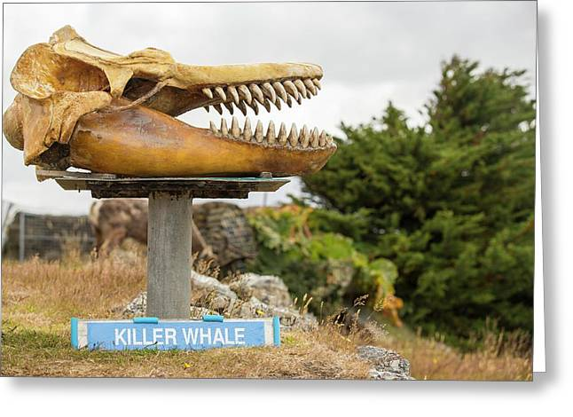 Whaling Museum Greeting Card by Ashley Cooper