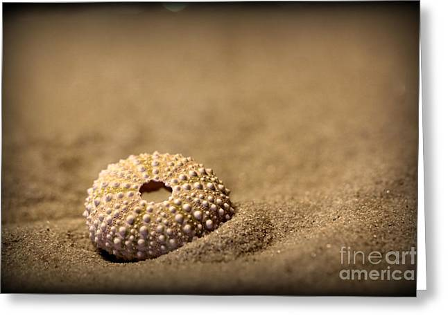What Becomes Sand Greeting Card