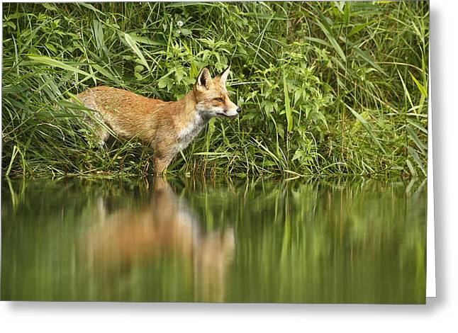What Does The Fox See Greeting Card by Roeselien Raimond