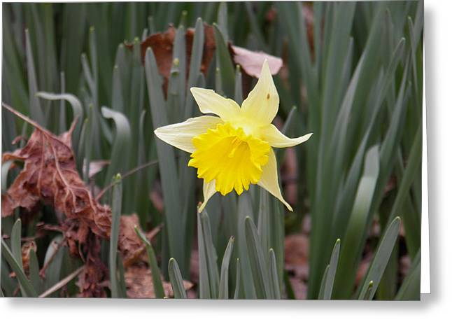 Greeting Card featuring the photograph Whats Up Buttercup by Nick Kirby