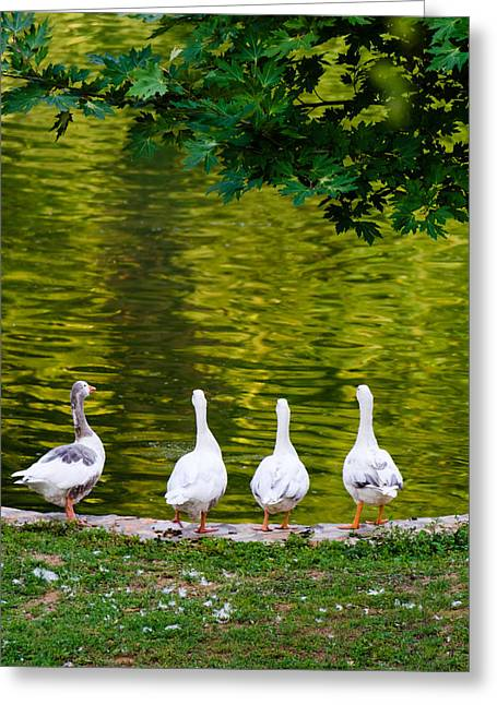 Whats Up Ducks  Greeting Card by Sotiris Filippou