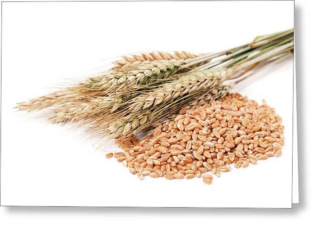 Wheat And Corn Greeting Card by Wladimir Bulgar