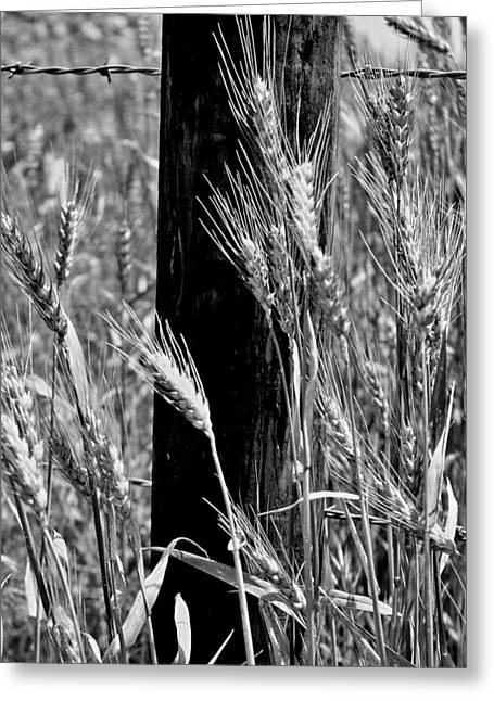Greeting Card featuring the photograph Wheat And Fence Post by Ellen Tully