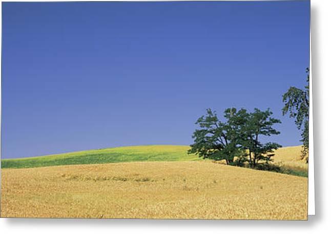 Wheat Crop In The Field, Washington Greeting Card by Panoramic Images