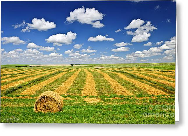 Wheat Farm Field And Hay Bales At Harvest In Saskatchewan Greeting Card