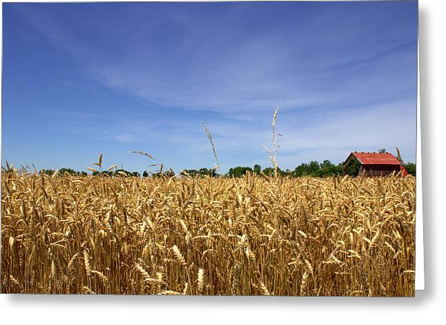 Wheat Field II Greeting Card