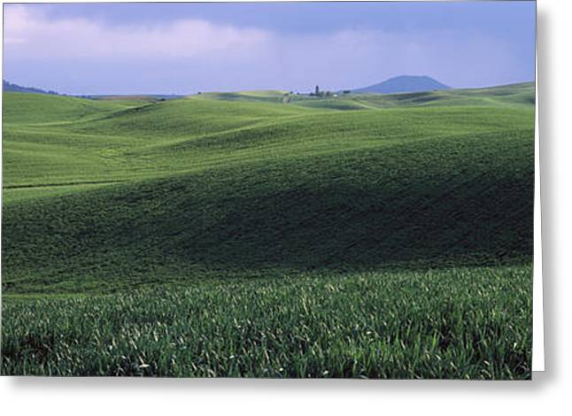 Wheat Field On A Rolling Landscape Greeting Card by Panoramic Images