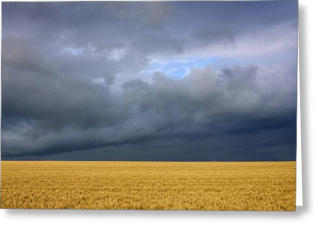 Wheat Field Under A Overcast. Auvergne. France. Greeting Card