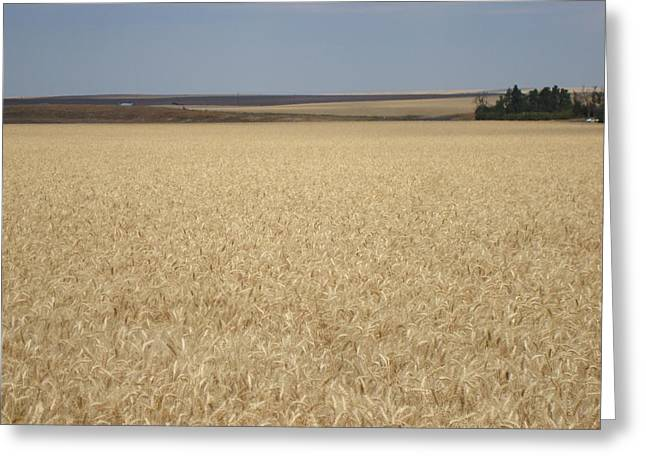 Wheat Fields Forever Greeting Card
