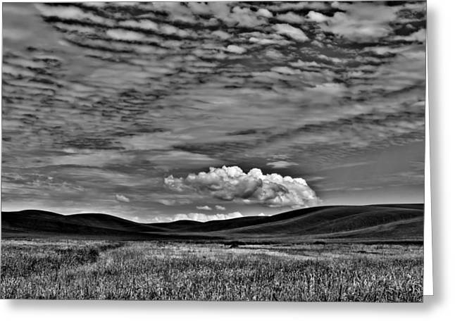Wheat Fields In The Palouse Greeting Card by David Patterson