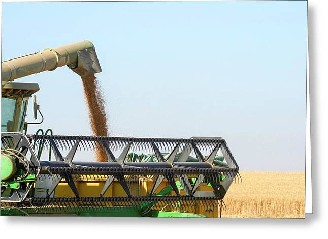 Wheat Harvesting Greeting Card by Photostock-israel