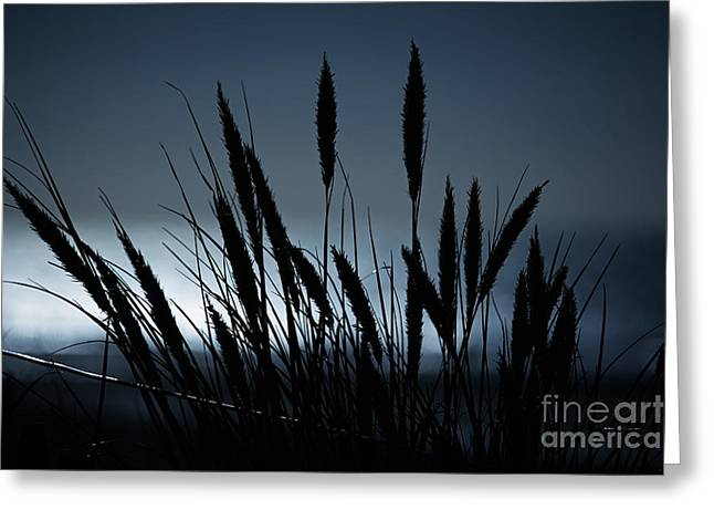 Wheat Stalks On A Dune At Moonlight Greeting Card