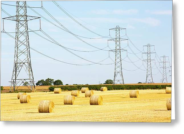 Wheat Stubble In A Field Greeting Card