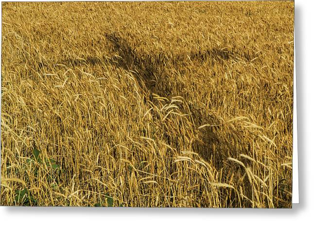 Wheat With Cross  Greeting Card