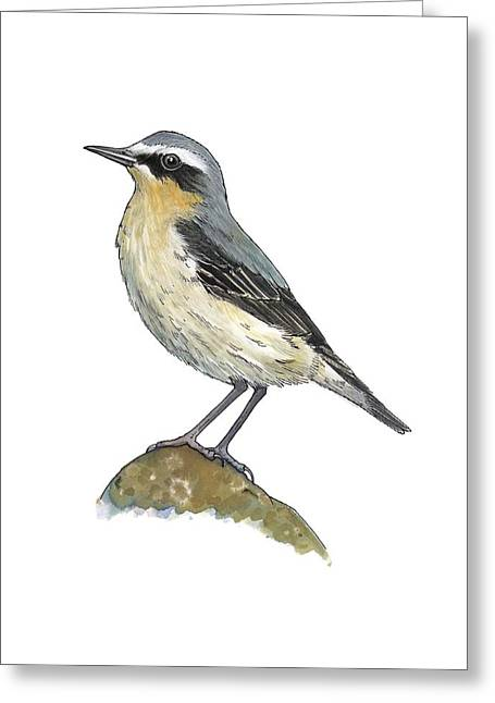 Wheatear, Artwork Greeting Card by Science Photo Library