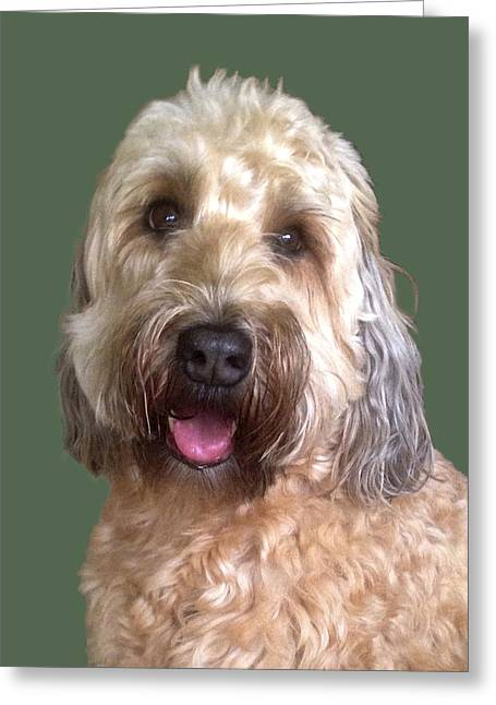 Wheaton Terrier Greeting Card
