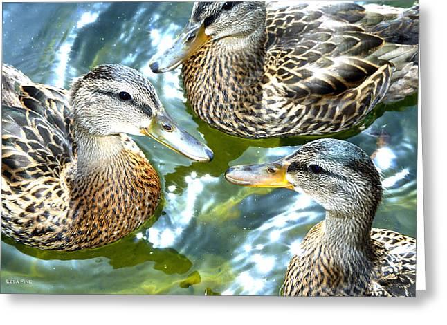 When Duck Bills Meet Greeting Card