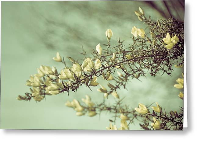 When Gorse Flowers Sing Their Melody Greeting Card by Loriental Photography