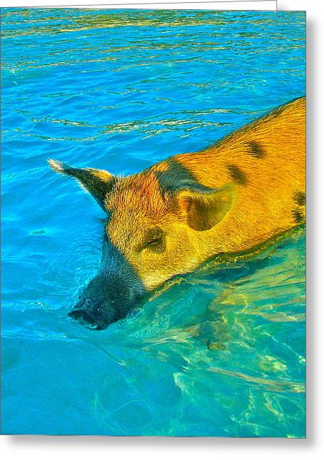 When Pigs Swim Greeting Card by Kim Pippinger