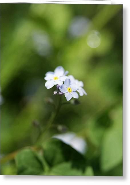 When You Look Close Greeting Card by Kim Lagerhem