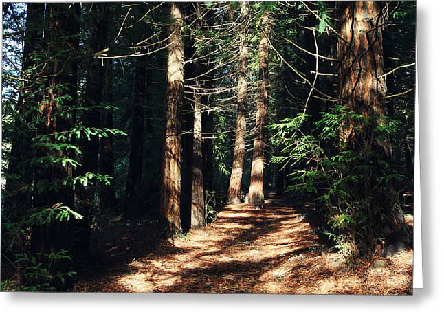 When You See The Light Greeting Card by Laurie Search