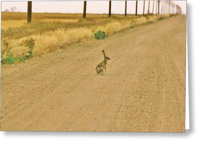 Greeting Card featuring the photograph Where Is Everyone? by Shirley Heier