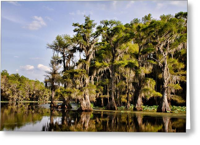 Greeting Card featuring the photograph Where The Cypress Grows by Lana Trussell