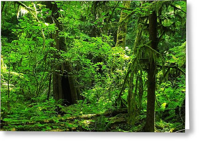 Where The Forest People Live Revised Greeting Card